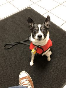 Sparky in his red raincoat at the doctor's office