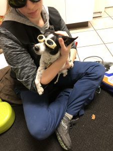 Sparky in his cool shades getting laser treatment on the therapist's lap